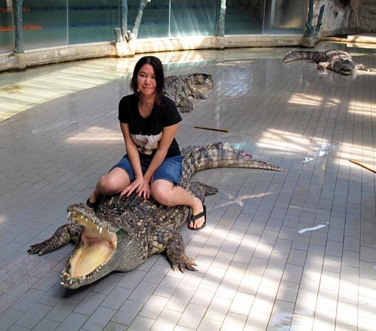Шоу з крокодилами