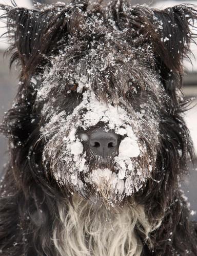Снежно_О-лольная живность
