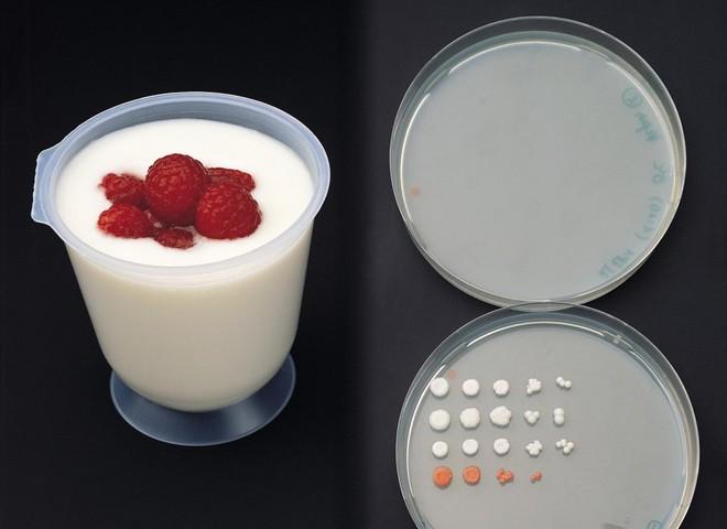 Йогурт врятує від стресу