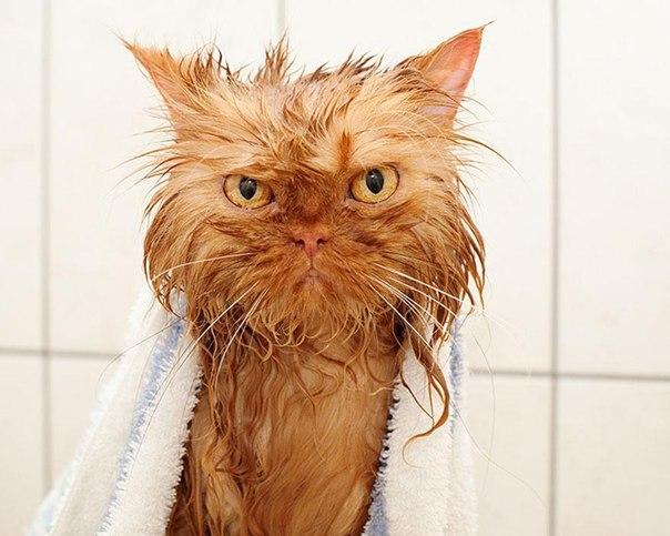 Мокрые картинки с котами