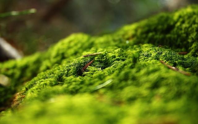 Захватывающая зелень