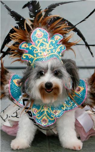 Фестивальная собака