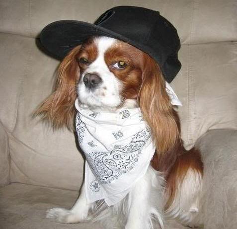 Собаки- реперяки