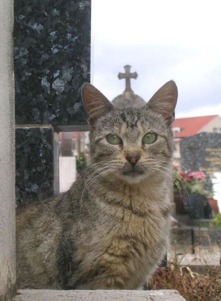 Вот он, новый Папа..