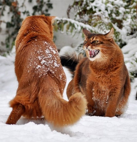 Пушистый рыжик в снегу