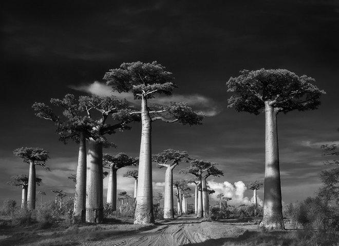 Найдавніші дерева світу