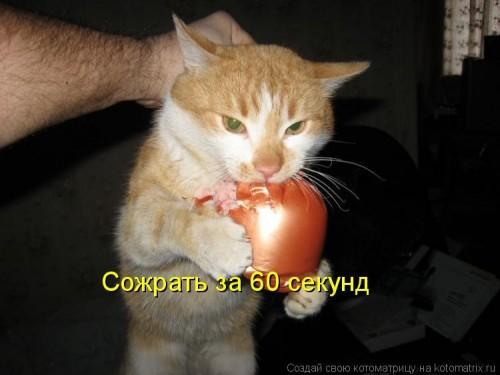 кошачая жизнь