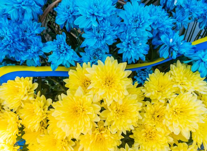 День прапора України 2019: привітання від зірок