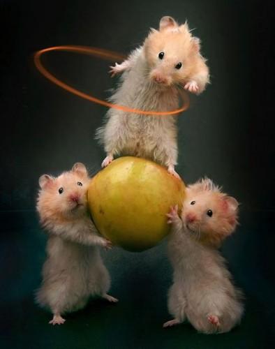 Три брата - акробата