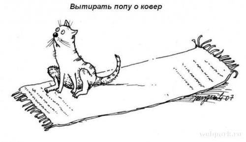 Обязаности котов в доме