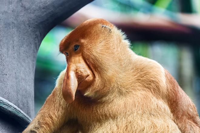 ТОП-7 самых смешных животных в природе