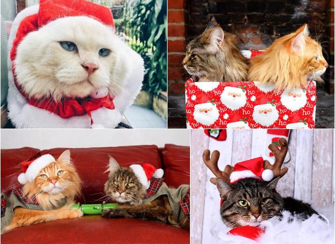#ChristmasCatsOfInstagram: рождественские котики - новый тренд социальной сети