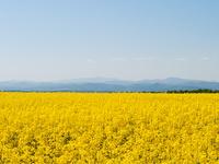 Украинское поле hd