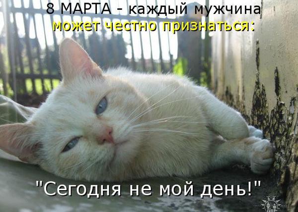 ТОП лучших котоматриц на 8 марта