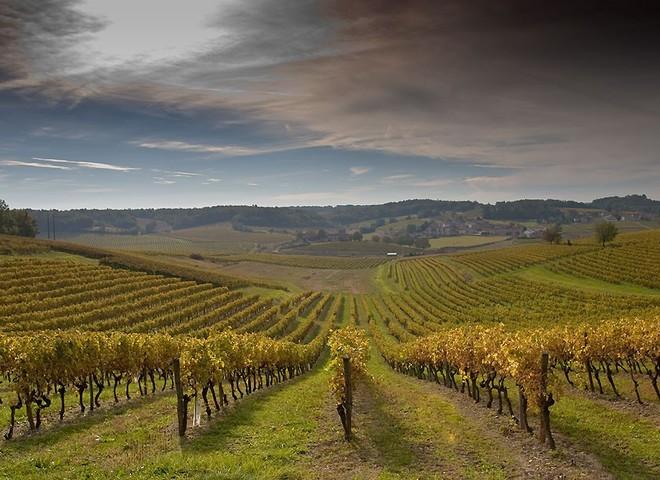 Французьке вино підкорює Китай
