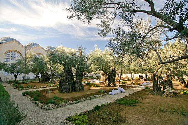 Цікаві місця Єрусалиму: Гетсиманський сад