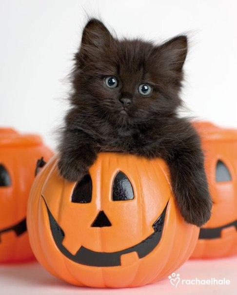 Няшки тоже празднуют Хэллоуин