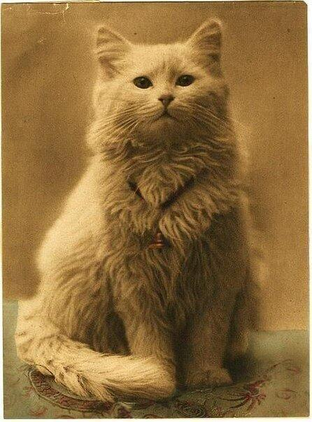 Одна из первых фотографий котов (1880-1890)