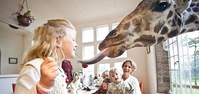 Необычный отель Поместье жирафа
