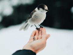 птичка на руці