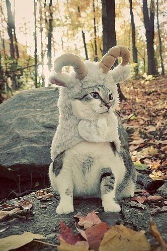 Смешные картинки про котов