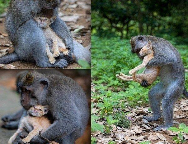 Материнская любовь распространяется на всё вокруг