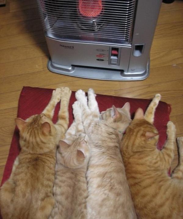 Осенью так не хватает тепла....