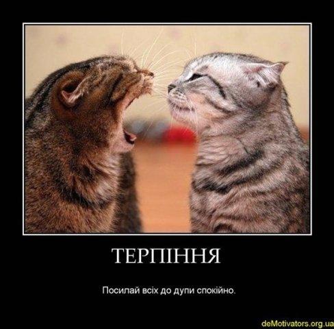 файна юкрайна=))