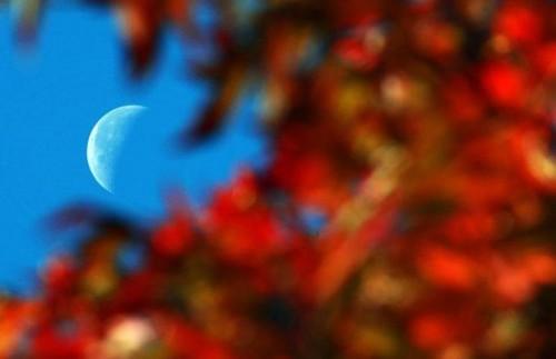 Осенняя подборка