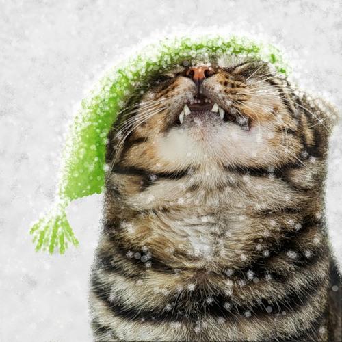 Снежные открытки с котом