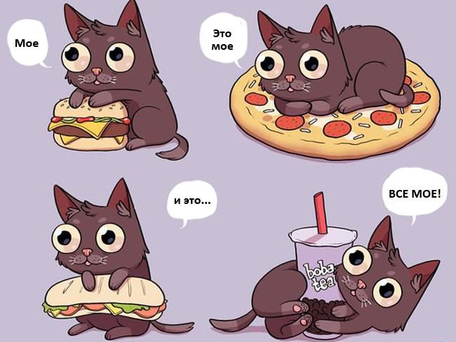 Увлекательная жизнь с котом