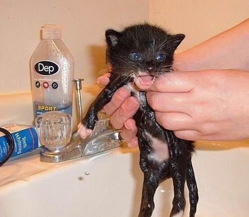 Мокрые кошки