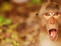 Прикольная обезьянка на рабочий стол
