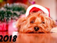 Прикольные открытки к Новому году собаки 2018