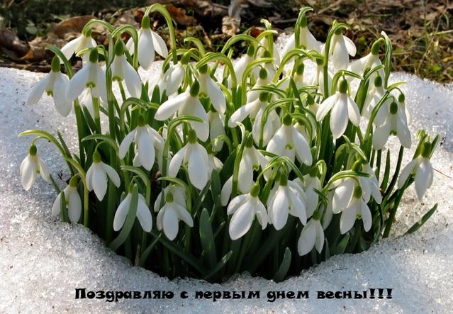 Открытка с первым днем весны!