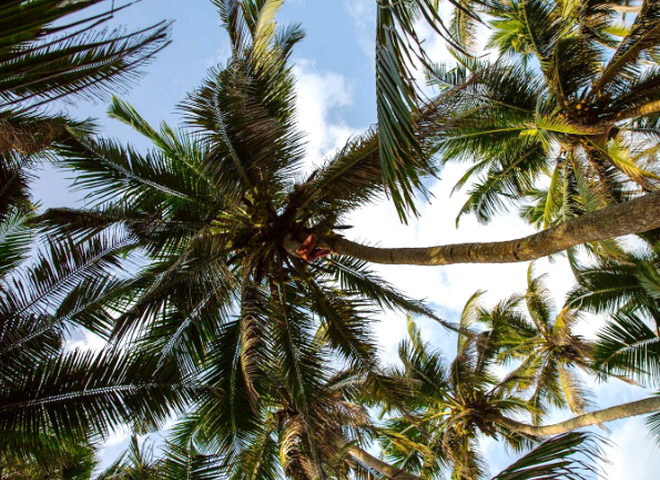 ТОП-5 стран, где можно согреться на пляже в январе