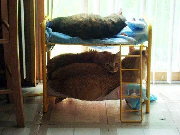 Кошачья общага. Прикольное фото