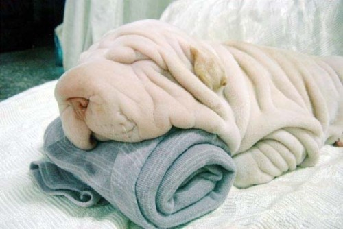 Собака - полотенце напоминака