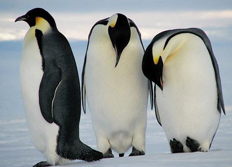 Пингвинчики Ржака!