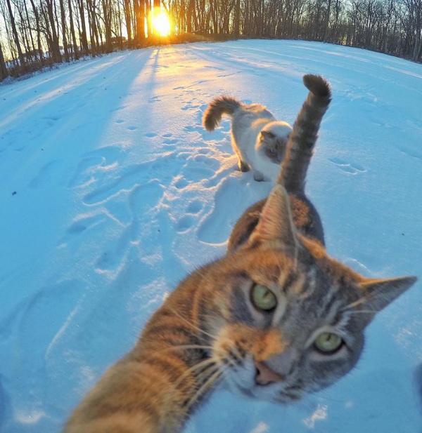 Котик Мэнни обожает делать селфи