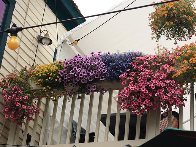 Узнайте, как украсить балкон цветами (фото) - tochka.net.