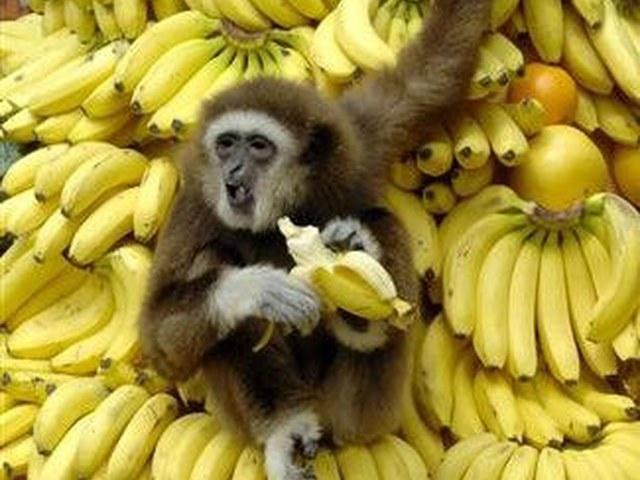 Банан фото прикол