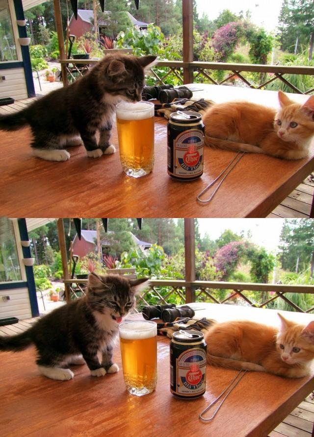 Какая гадость, это ваше пиво!