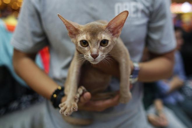 Мур-мур: лайфхаки для владельцев котов и кошек