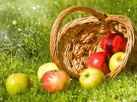 Солнечные яблоки