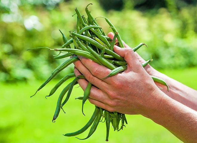 Стручковая фасоль на зиму: польза летних витаминов