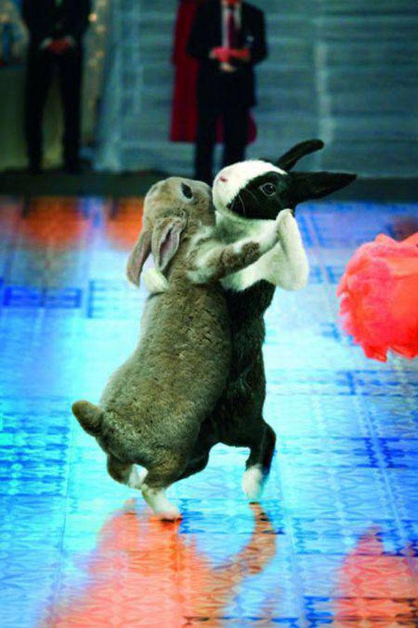 Танцующие кролики