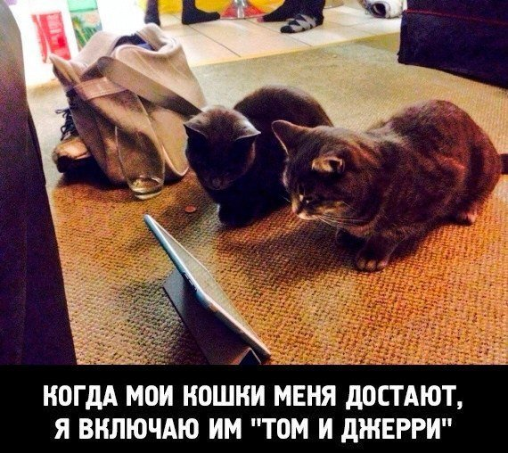 Котейки смотрят мультики