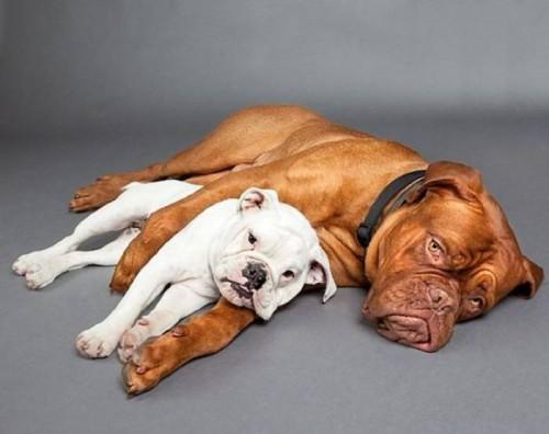 Пикольные собаки - смешняки