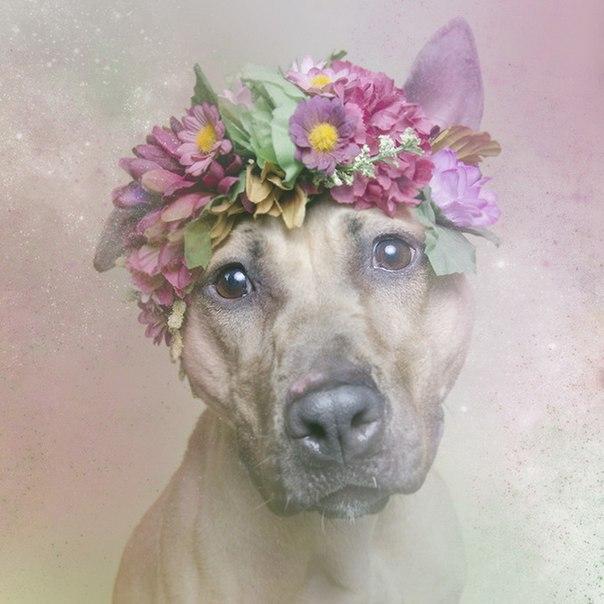 Питбули в цветах Sophie Gamand